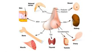 Pituitary Gland Tumours and Surgery